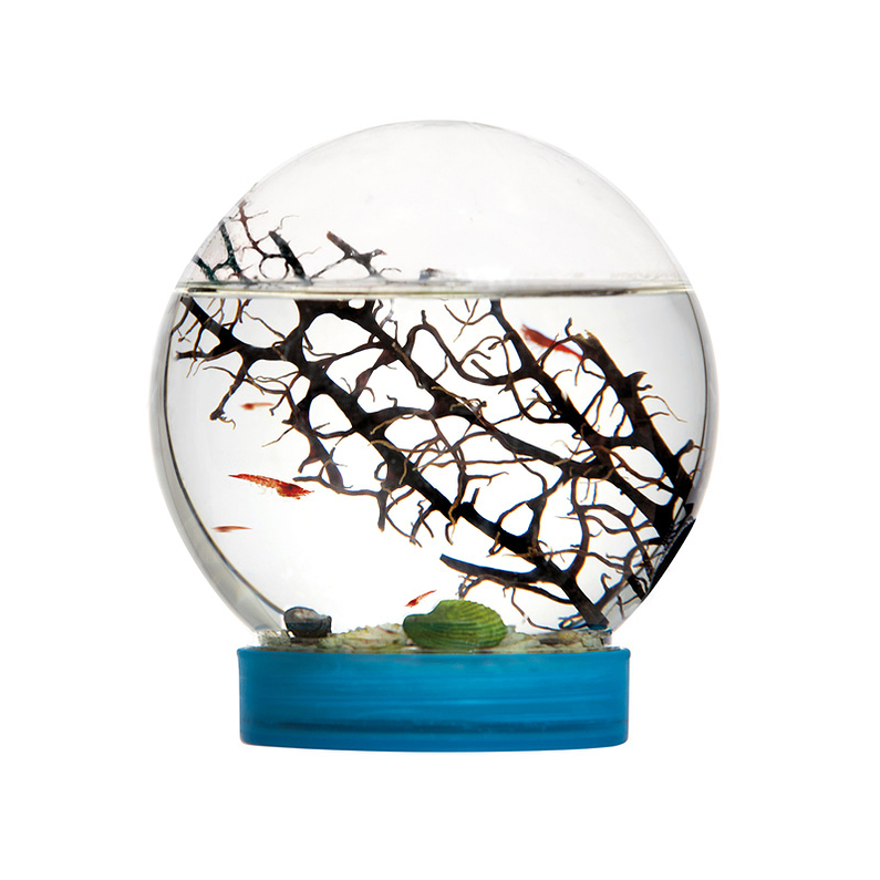 Mini Aquarium E'Vivo DIY